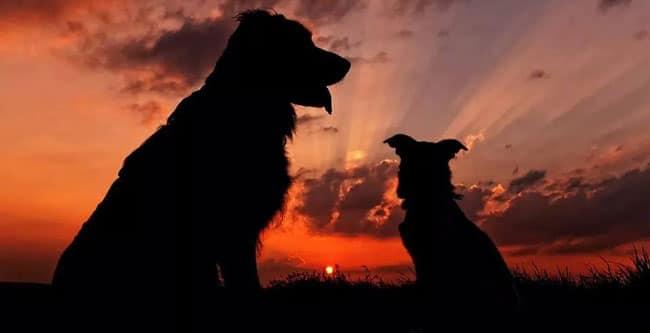 Neues Von Maxx Und Lucca Ein Hund Ist Nicht Genug ⋆ Hunde