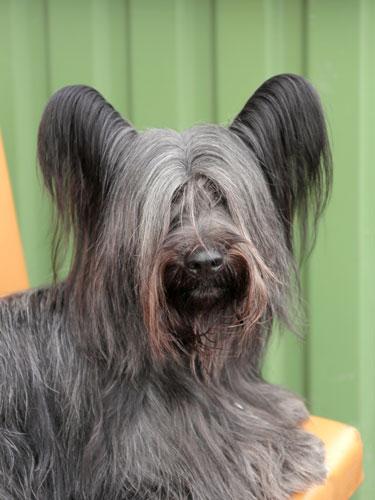 sky-terrier2