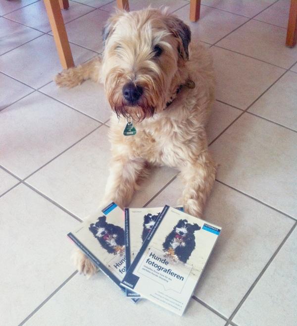 gewinnspiel-hunde-fotografi