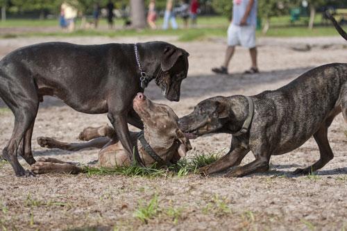 mobbing-bei-hunden