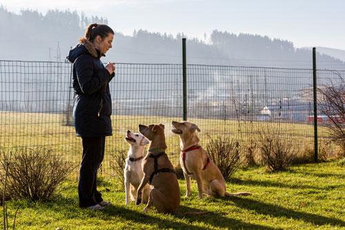 qualifizierter-Hundesitter
