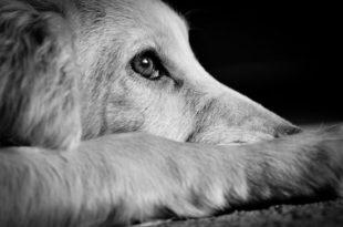 Was passiert mit dem Hund, wenn ich sterbe?