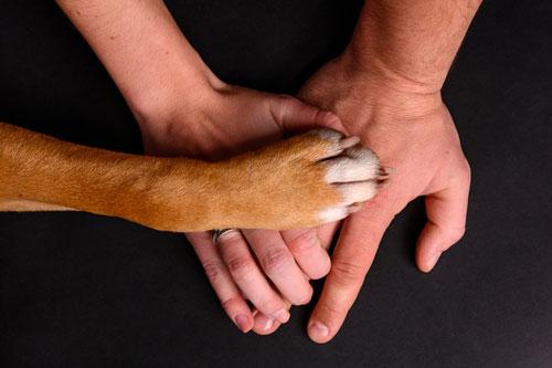 hund-versichert