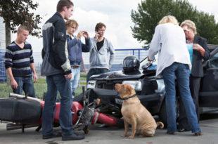 hund-verursacht-unfall