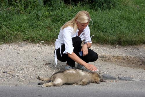 Hohenzollern-mit-totem-Straßenhund