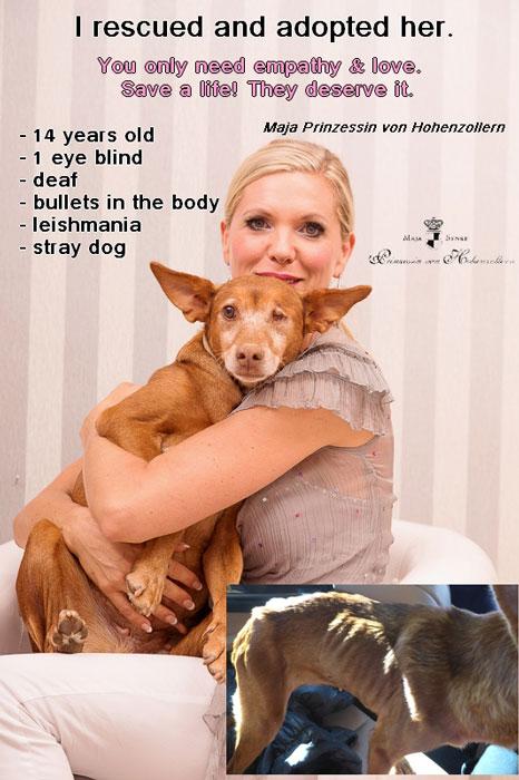Maja-rettet-hund