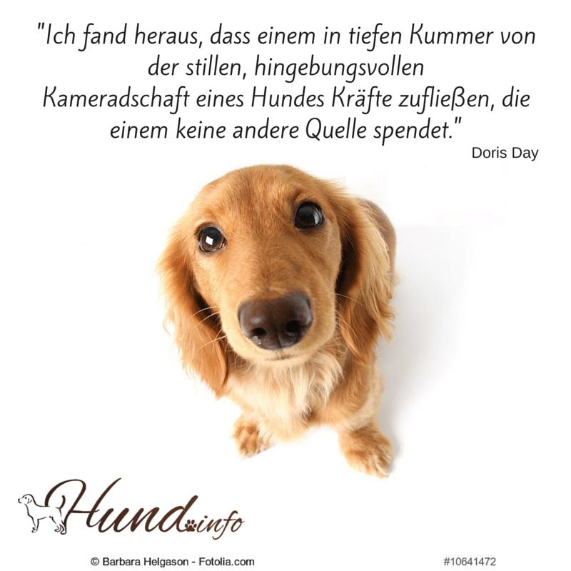 Berühmt Anatomie Des Hundes Ohr Fotos - Menschliche Anatomie Bilder ...