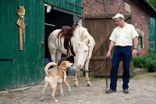 annaehern-hund-pferd