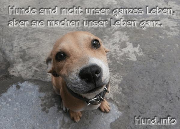Kauf Einen Jungen Hund Und Du Wirst Fur Dein Geld Wild Entschlossene Liebe Bekommen