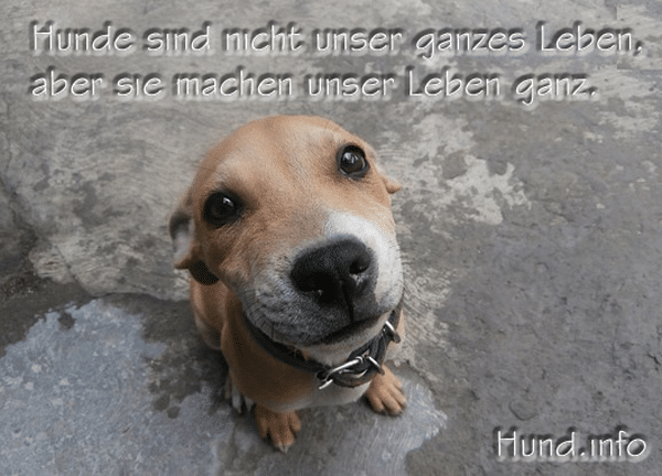 sprüche über hunde Hundesprüche ⋆ Hunde sprüche über hunde