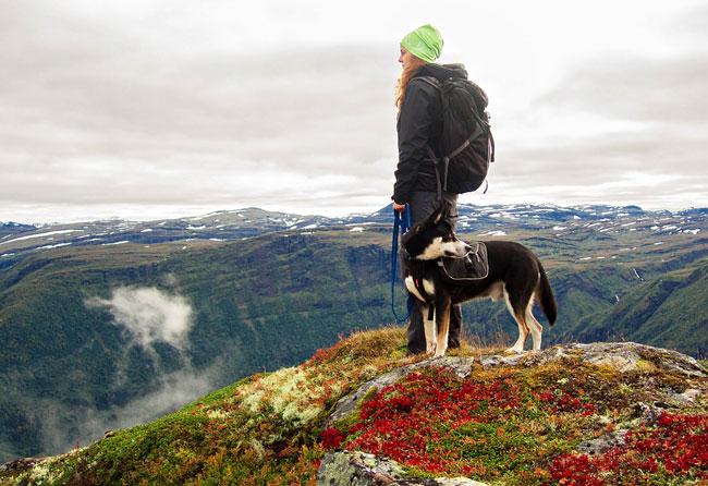 wandern-hund