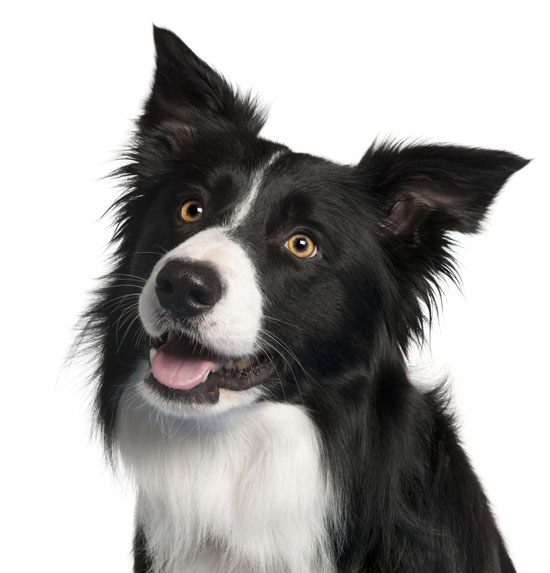 Was kann ein Hundehirn leisten?