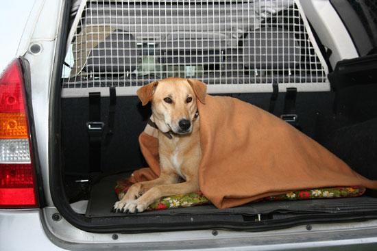 zitterpartie hunde im kalten auto hunde. Black Bedroom Furniture Sets. Home Design Ideas