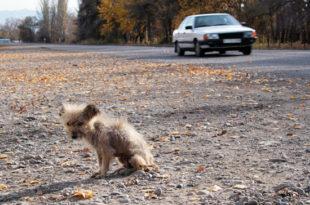 hund-gefunden