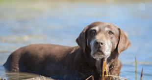 Warum Hunde Menschen Ablecken Hunde