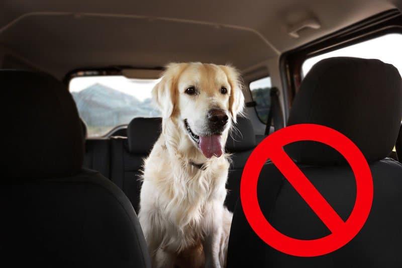 Hund ungesichert im Auto
