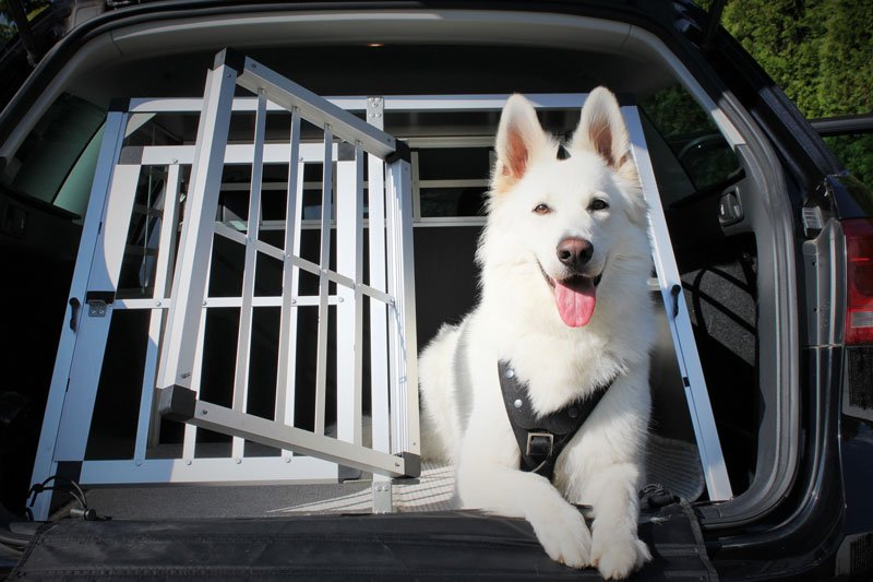 Hund Sicherheit Auto