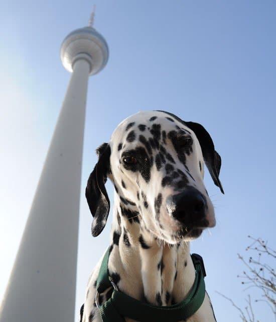 Leinenpflicht in Berlin