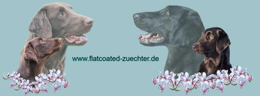 Hier finden Sie deutschlandweit seriöse und kontrollierte Flat Coated Retriever Züchter