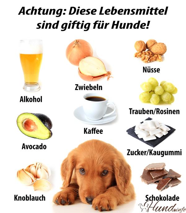 diese Lebensmittel sind giftig für Hunde