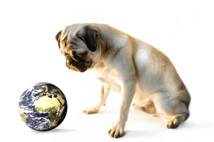 Hunde und die Auswirkung auf das Klima