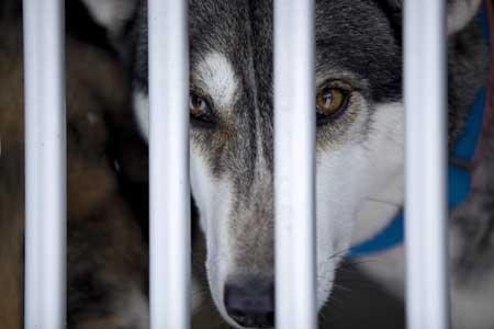 Tierheim Passau Keine Hunde Für Jäger Hunde