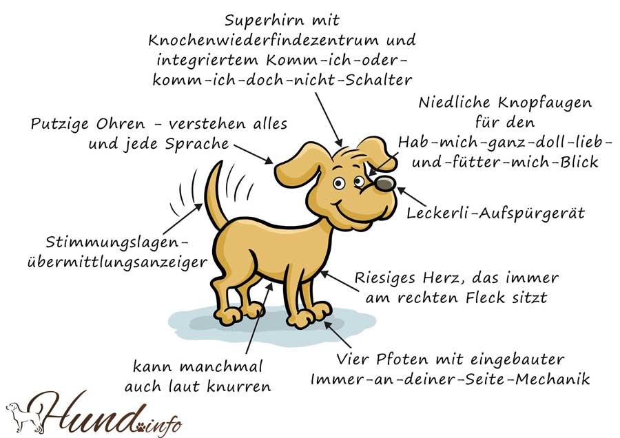 Beschreibung eines Hundes
