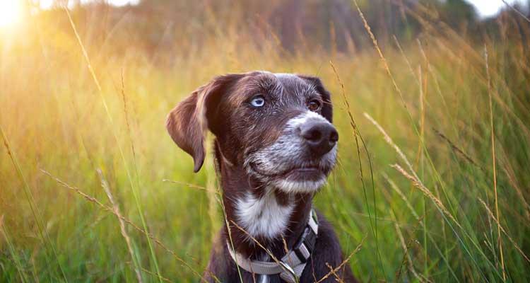 Schwarzkümmelöl Bei Hunden
