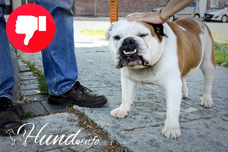 Gerade von Fremden mögen Hunde selten am Kopf getätschelt werden!