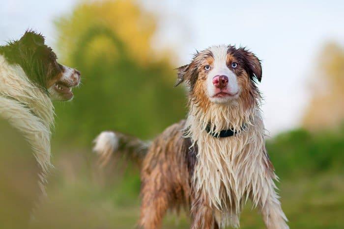 nasser Hund - Hundegeruch