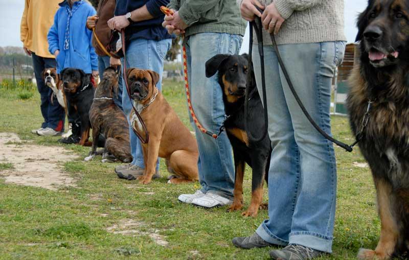 Welcher Hund eignet sich am Besten zum Mantrailing?