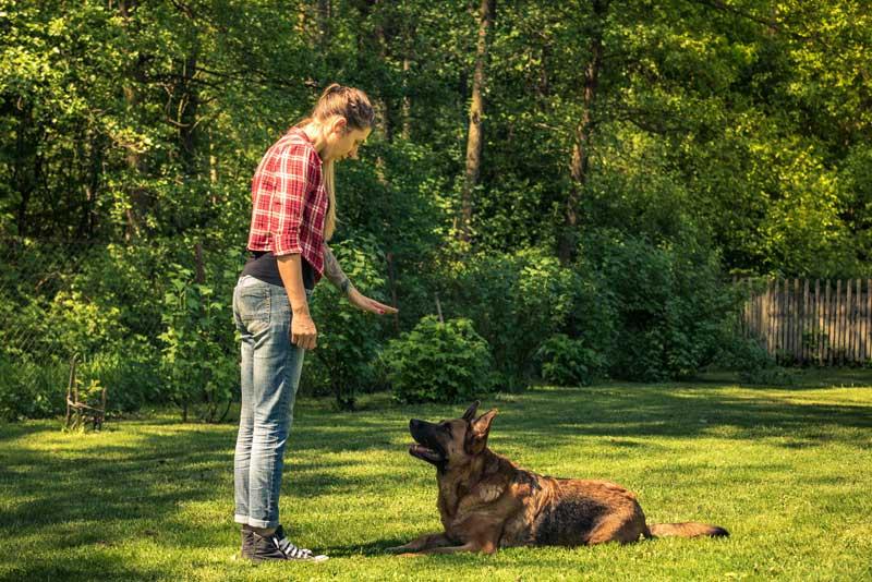 nonverbalen Hundeerziehung - Platz