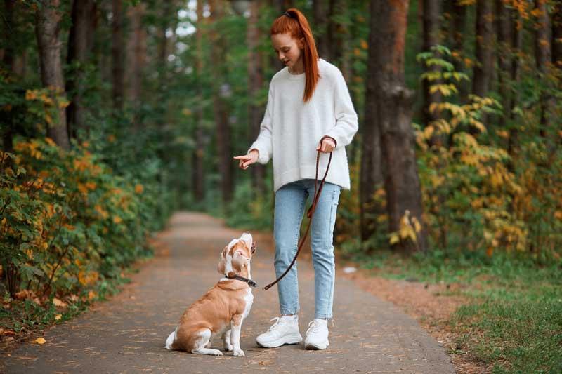 nonverbalen Hundeerziehung - Sitz