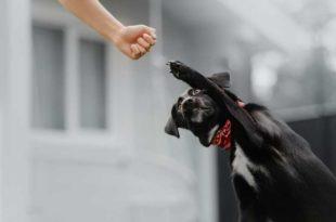 Empowerment-Hund