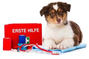 erste-hilfe-set-hund