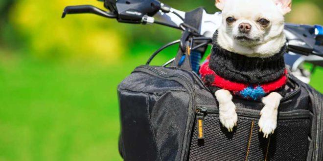 fahrradausflug-mit-hund