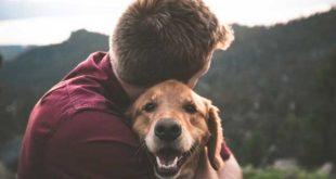 hund-checkliste