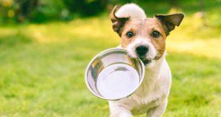 hundefutter-angebote