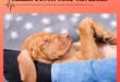 Heilen-durch-Hund-auflegen