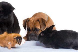 hund-an-andere-haustiere-gewoehnen
