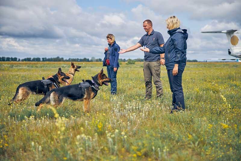 professionelles-Hundetraining