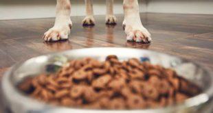 nahrungsergaenzung-hund