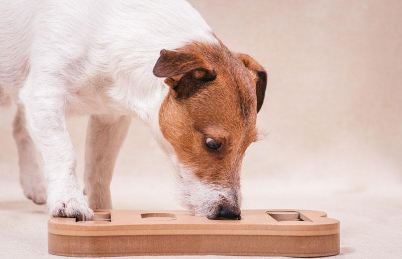 Intelligenz-Spielzeug Hund
