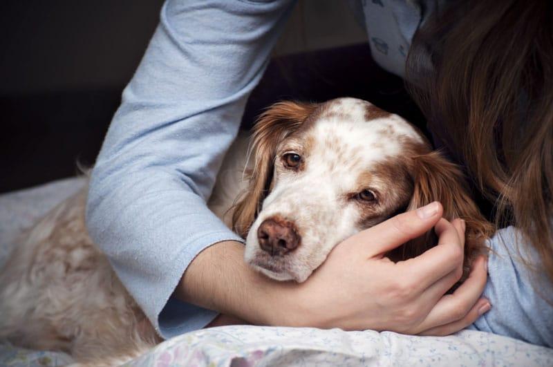 Vestibularsyndrom beim Hund