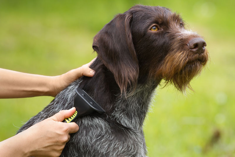 Fellpflege Hund - richtig bürsten