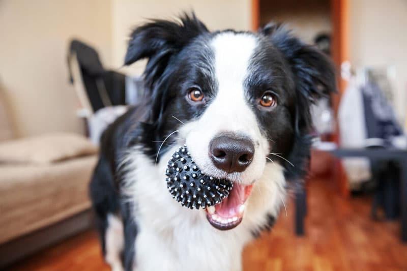 geschenk hundespielzeug ball