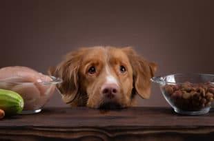 gesunde-ernaehrung-hund