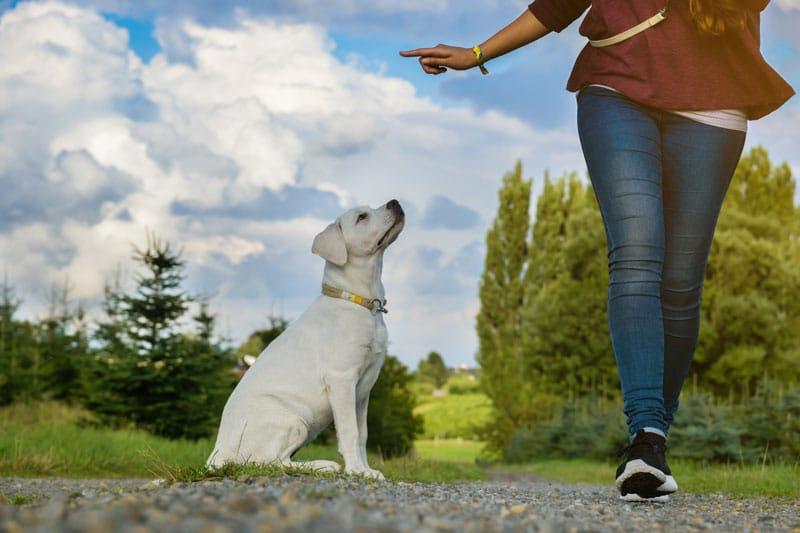 hund Kommando bleib