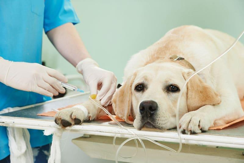 Kosten Tierarzt