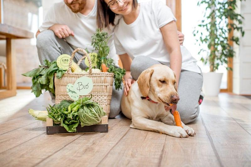 vegane Hundeernaehrung